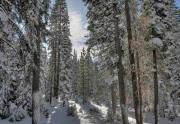 martiswood-winter