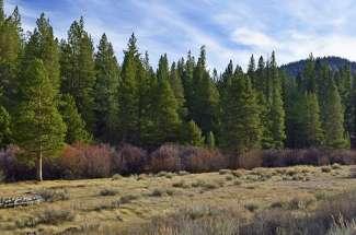 Sierra Tract
